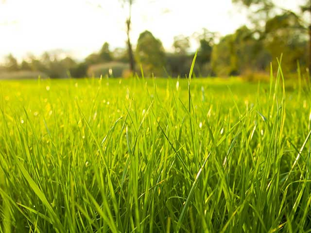 French Riviera gardens need a healthy green lawn specialist